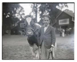 Boy with heifer or cow