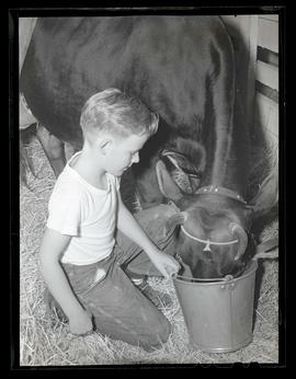 Boy feeding cow