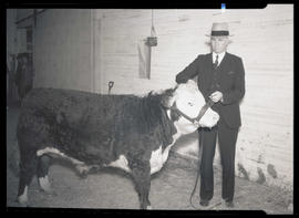 Man with steer