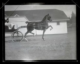 Horse pulling buggy