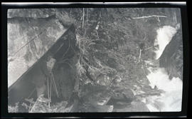 William L. Finley photographing Sierra hermit thrushes
