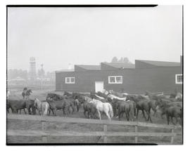 Herd of horses, probably at livestock show