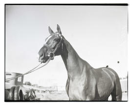 Horse named Alta Loma