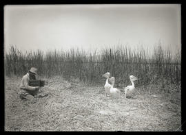 W. L. Finley Photographing Pelicans