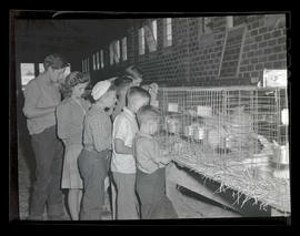 Children looking at caged rabbits