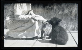 Irene Finley feeding a bear cub and cougar kitten