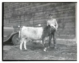 Man with young steer
