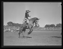 Bronc rider at Pendleton Round-Up