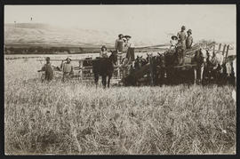 Workers posing in farm field with horses
