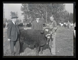 Three unidentified men with steer, probably at Pacific International Livestock Exposition