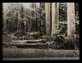 Forest with felled trees