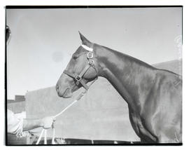 Horse named Panamint