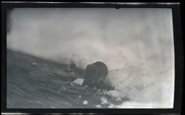 Red-backed mouse