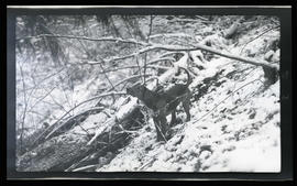 Hunting dog in the snow