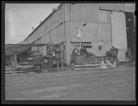 Workers watching seagulls at Oregon Shipbuilding Corporation, Portland