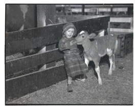 Young girl and calf