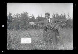 Unidentified man holding vetch at John Jacob Astor Branch Experiment Station, Astoria