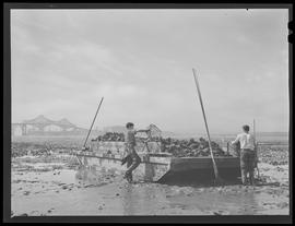Oyster flats and workers at Coos Bay