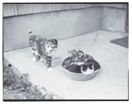 Cat with kittens in bowl