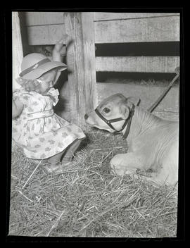 Young girl in stall with calf
