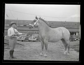 Luther Harrel? posing with horse and trophy