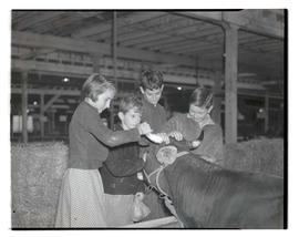 Children petting cow, probably at Pacific International Livestock Exposition