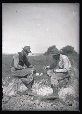 H. T. Bohlman and W. L. Finley with Terns