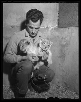 Al Knowles with Lion Cubs, Portland Zoo