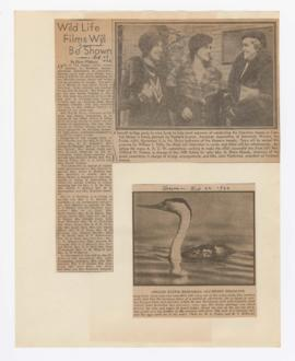 Image of western grebe and article discussing benefit event for the American Association of Unive...